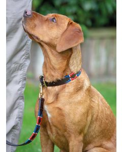 Digby & Fox Drover Polo Dog Collar
