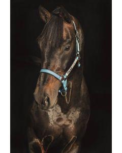 Horseware Field Safe Headcollar Baby Blue / Navy Stripe