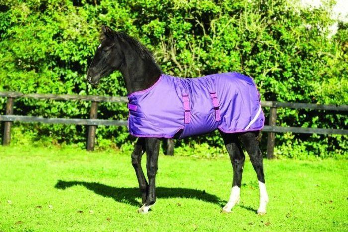 Horseware Amigo Foal Medium Weight 200G Turnout Rug Berry / Fuchsia