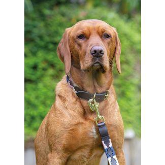 Digby & Fox Drover Polo Dog Lead