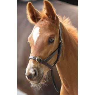 Shires Blenheim Leather Foal Slip Havana