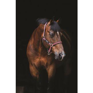 Horseware Amigo Headcollar Red, White, Green & Black