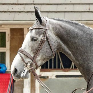 John Whitaker Chicago Perforated Leather Bling Bridle - Chelford Farm Supplies