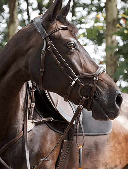 Top Equestrian Brands