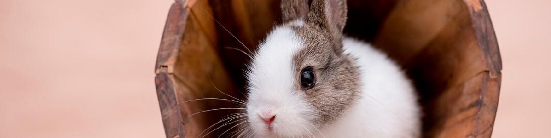 Small Animals Pet Supplies